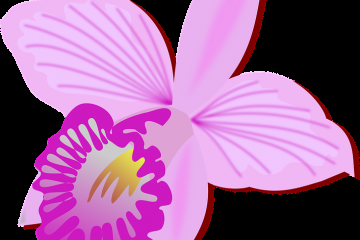 orchidee.png
